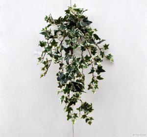 Piante da interno, piante da camera da letto: edera