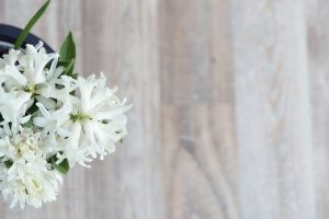 Coltivare i bulbi di giacinto
