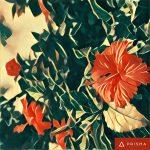Prisma, foto fiori prismafiori, fiori come quadri, fiori e quadri