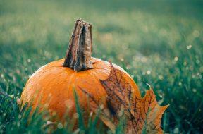 La zucca ad ottobre