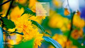 Kerria Japonica, fioritura di febbraio