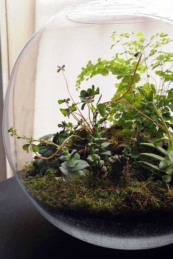 12 idee per un mini giardino interno fito for Idee per creare un giardino