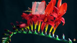 Il calendario dei fiori di ottobre: la crocosmia e la sua fioritura