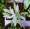 Salvia e menta aromatiche