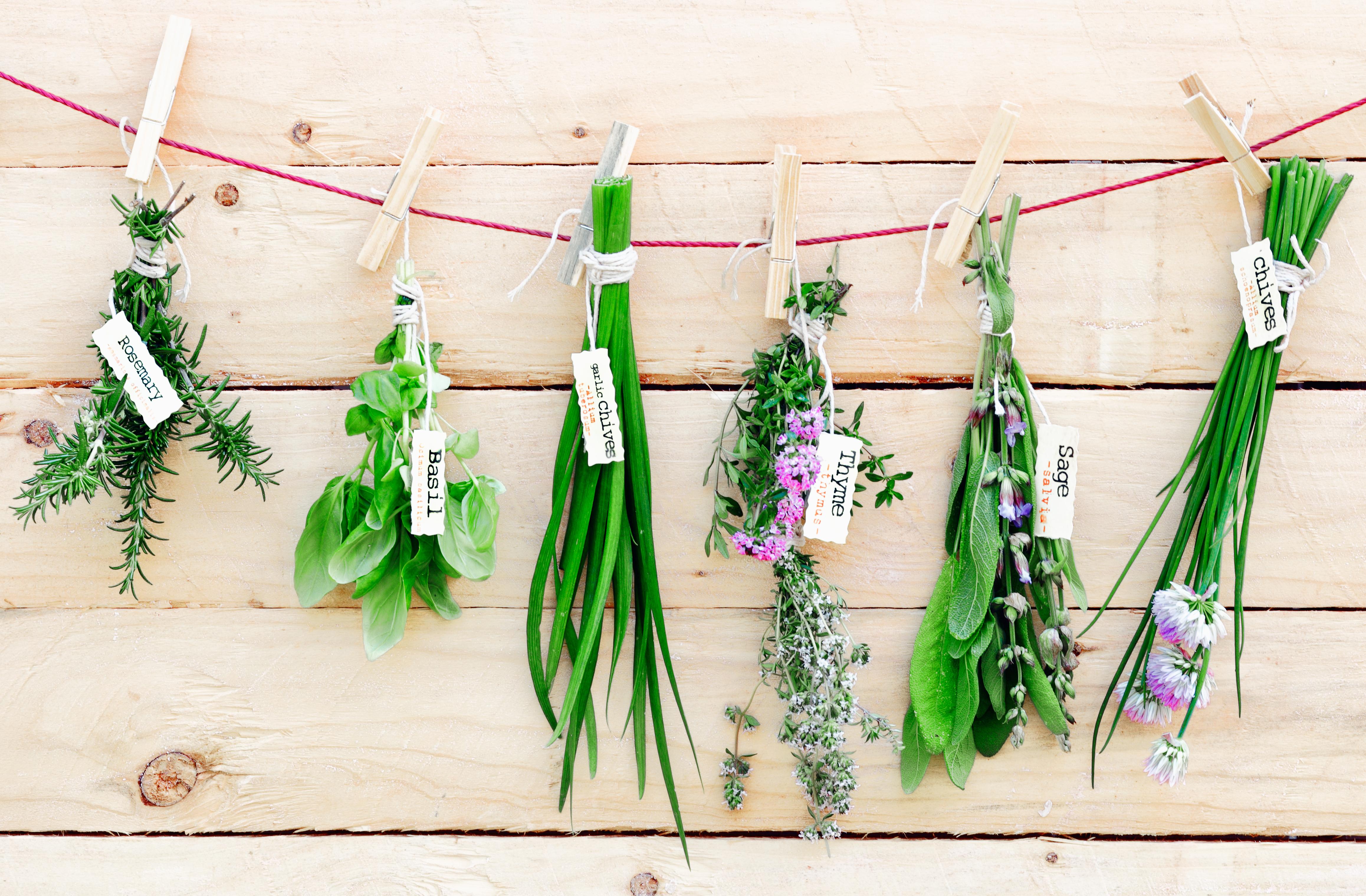 Coltivare In Casa Piante Aromatiche 5 consigli per coltivare le aromatiche in inverno | fito