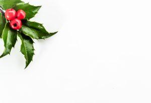 Agrifoglio dettaglio bacche e foglie
