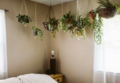 piante camere da letto