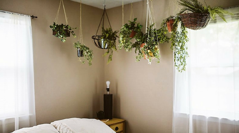 12 Piante perfette per la camera da letto | Fito