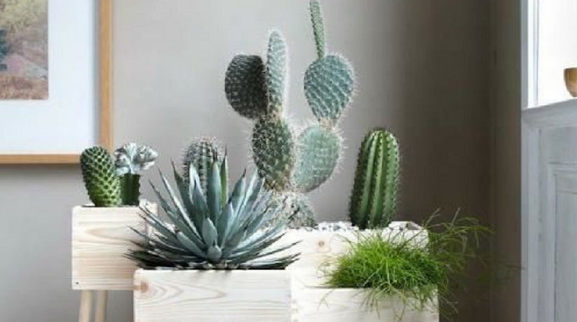 12 idee per un mini giardino interno fito - Giardino interno casa ...