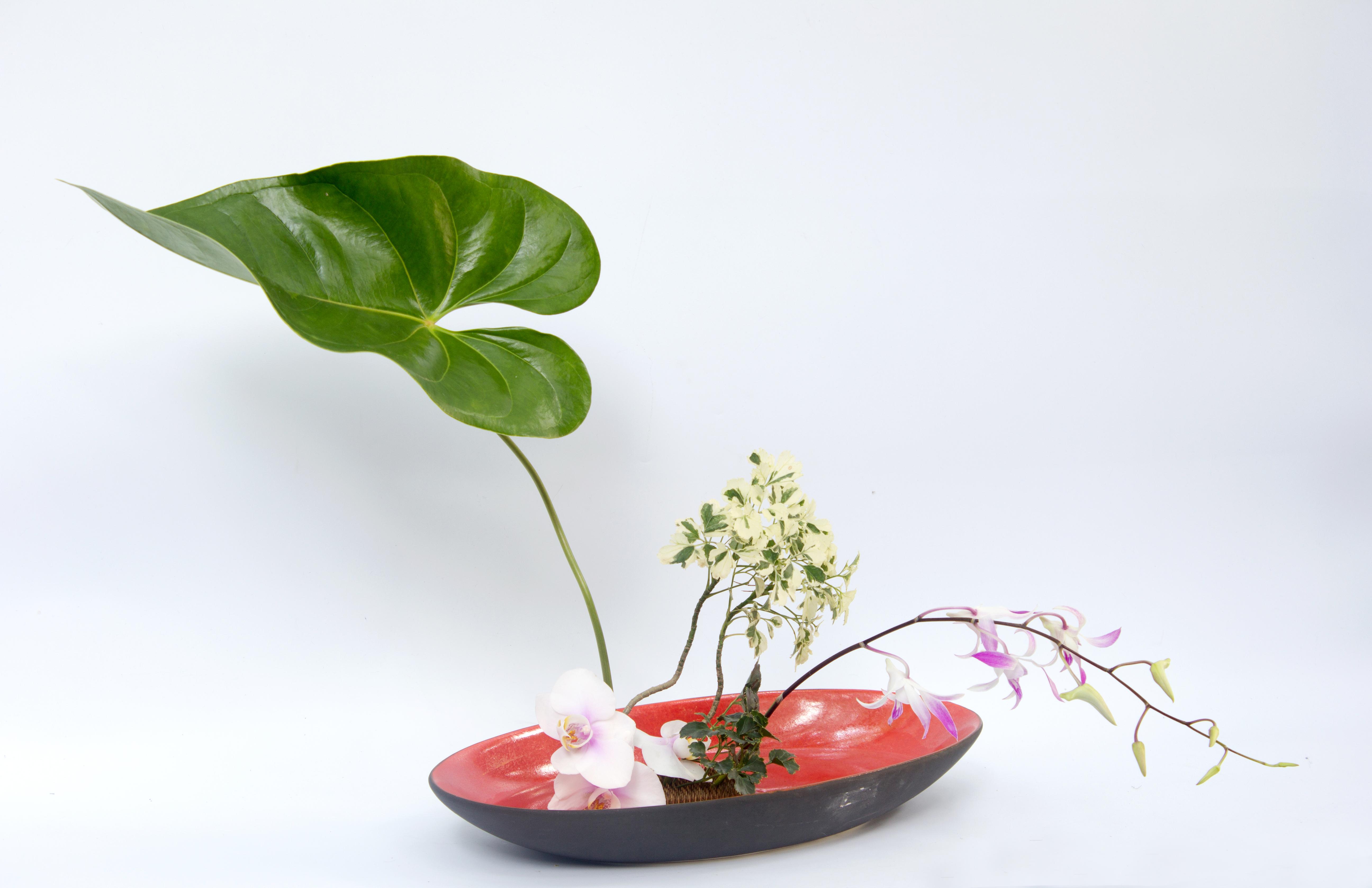 Creare Composizioni Per Natale le magiche composizioni dell'ikebana   fito