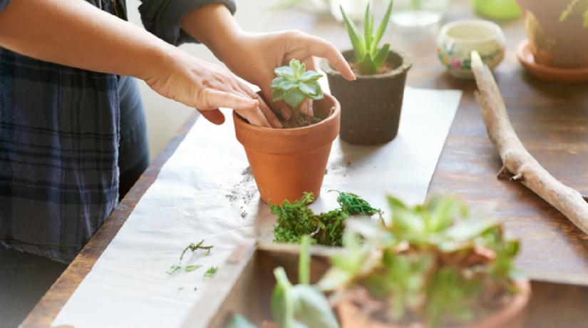 piante resistenti