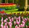 Tulipani colorati, verdi, rosa, gialli e rossi nel parco di Keukenhof in Olanda
