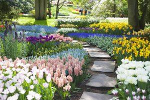 Via con narcisi e giacinti nel parco fiorito di Keukenhof in Olanda