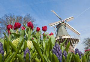 Fiori e mulini a vento in olanda a Keukenhof