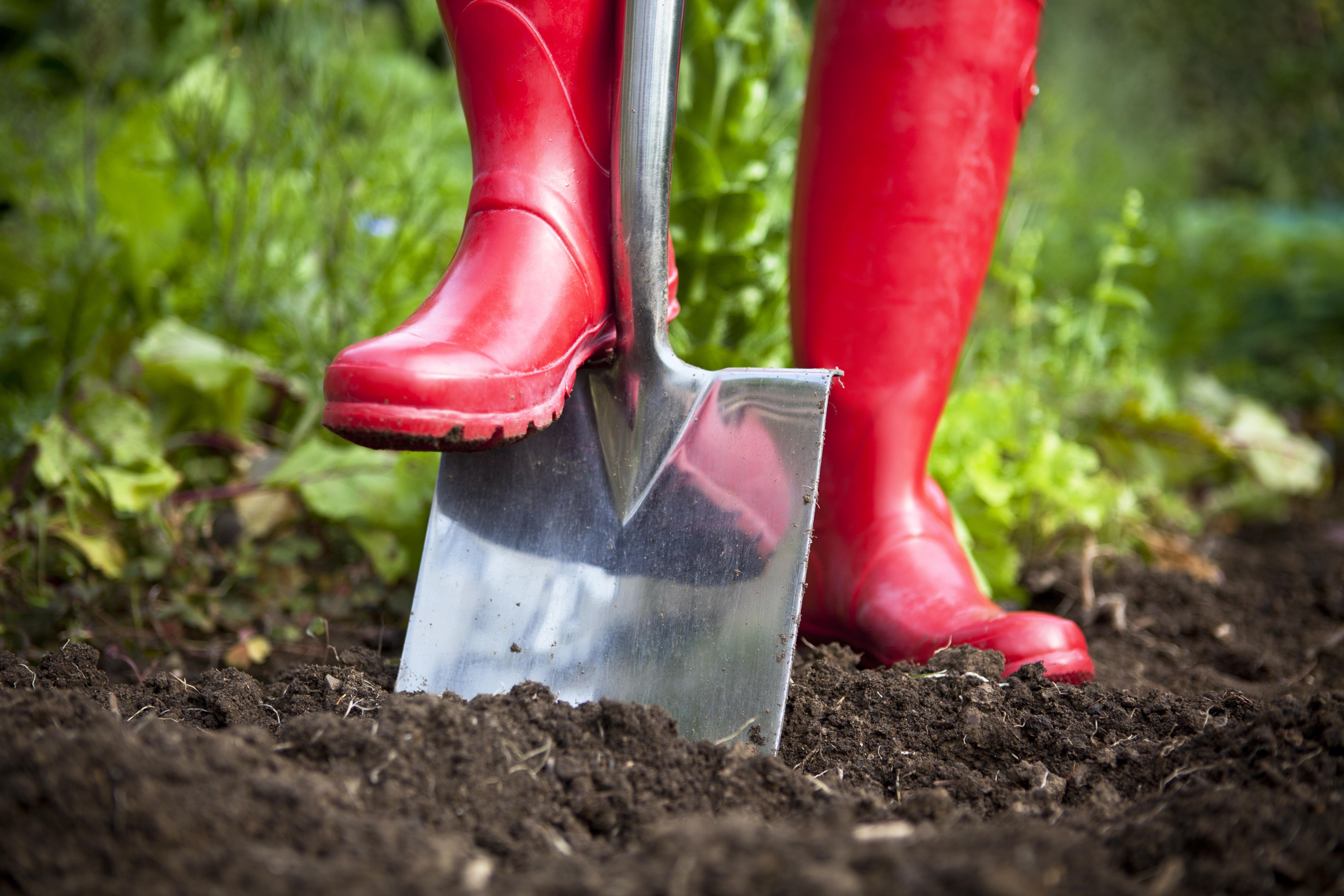 Cosa Piantare A Febbraio febbraio: i lavori da fare in giardino e nell'orto | fito