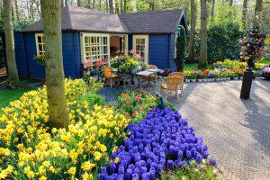 Tulipani viola e gialli a Keukenhof in Olanda