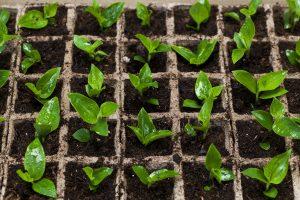 Febbraio i lavori da fare in giardino e nell 39 orto fito for Cosa seminare a febbraio