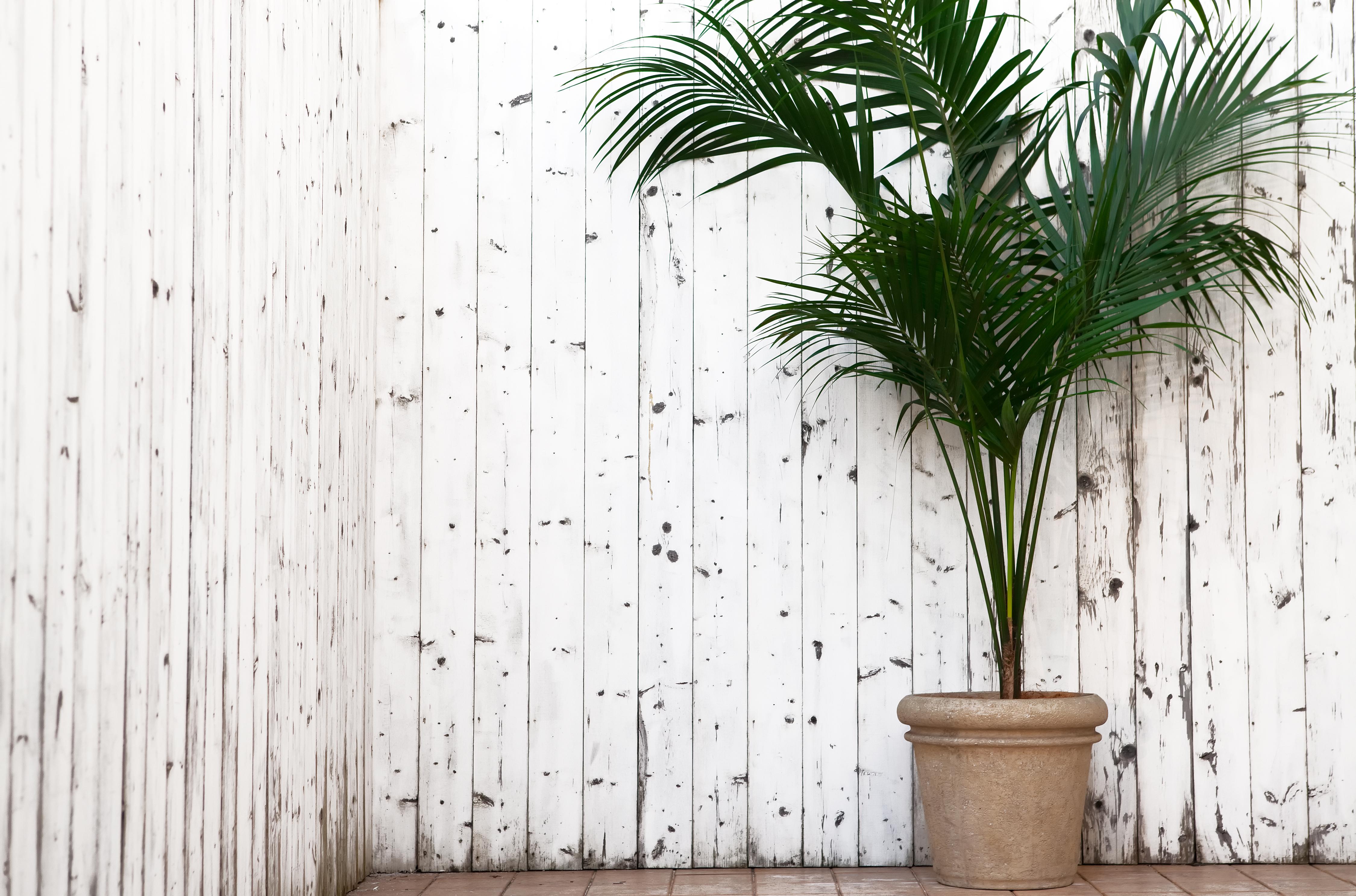 9 piante che resistono a tutto fito for Palma pianta