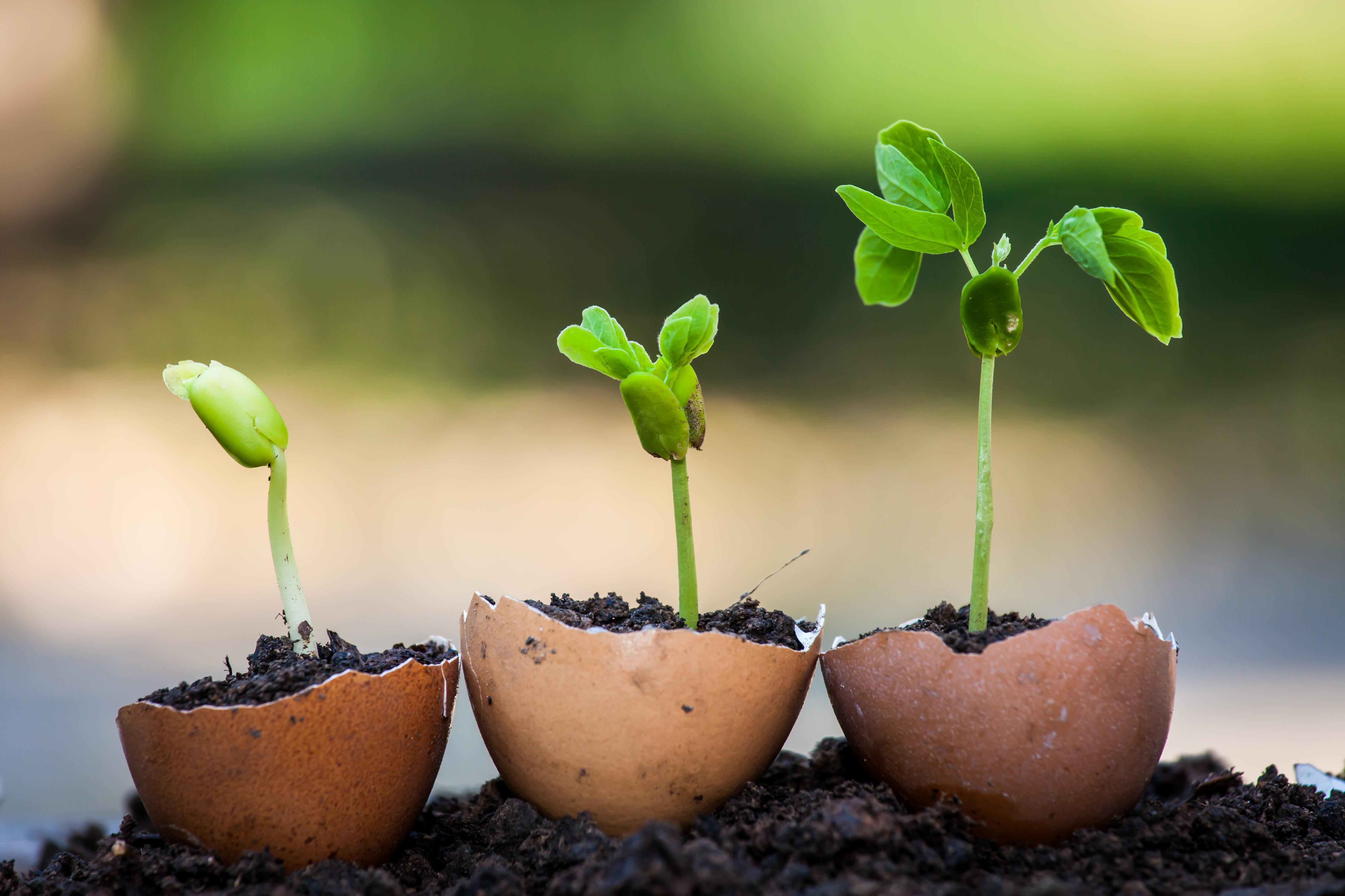 Guscio Delle Uova Come Fertilizzante Per Le Piante
