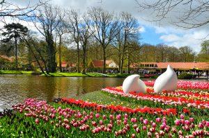 Il parco di KeuKenhof e la fioritura dei tulipani in Olanda