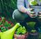 Marzo i lavori da fare in giardino
