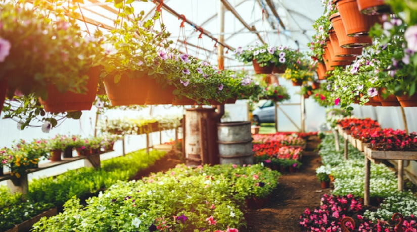 Febbraio i lavori da fare in giardino e nell 39 orto fito - Lavori in giardino ...