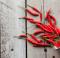Come coltivare una pianta di peperoncini