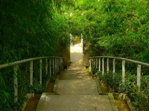 Bamboo Garden, Parc de la Villette Parigi