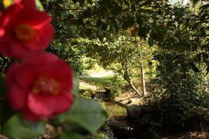 il parco di villa Merlia (9)