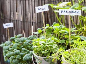 coltivazioni aromatiche in balcone