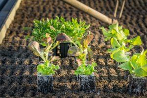 Cosa seminare nell'orto ad aprile