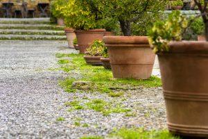 Aceto in giardino eliminare erbacce