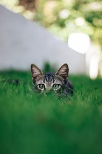 Aceto in giardino allontanare gli animali