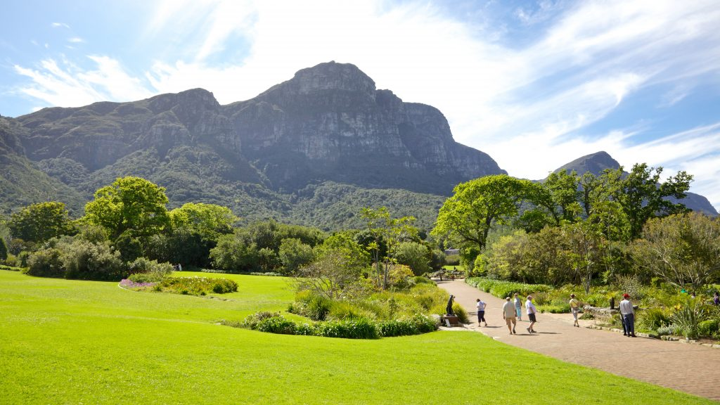 Kirstenbosch giardino botanico Cape Town