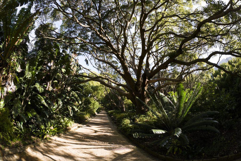 Kirstenbosch botanical garden cape town