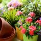 fiori aprile