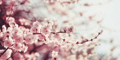 lavori aprile giardino
