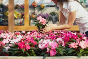 I lavori maggio semina bulbi
