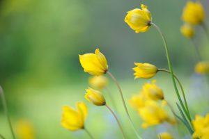 Giardino maggio bulbi a fioritura estiva