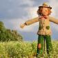 Lavori da fare orto giugno