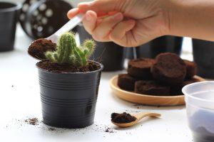 Fondi di caffè concime naturale per piante