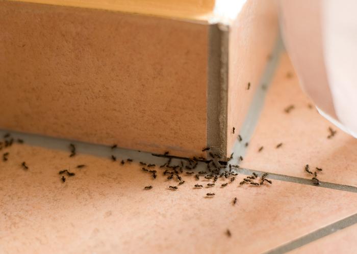 Bicarbonato allontanare formiche