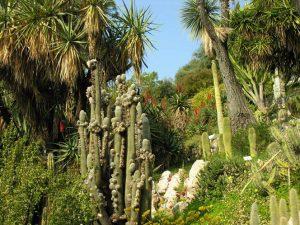 Giardini Hanbury_8