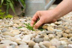 Come eliminare erbacce senza diserbante_1