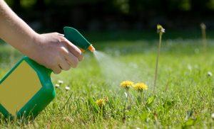 Come eliminare erbacce senza diserbante_2