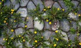 Come eliminare erbacce senza diserbante_5