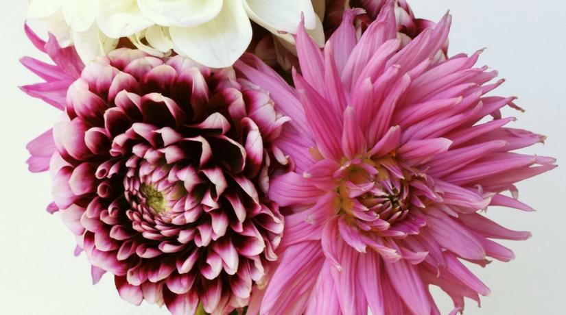 7 fiori di settembre fito for Donare un giardiniere