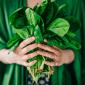Coltivare gli spinaci