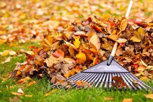 foglie autunnali cadute