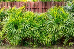 Bambù pianta siepe photo